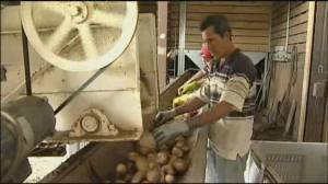 Canadian fruit & vegetable growers call for government support (02:18)