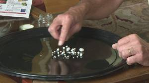 Vancouver Island man finds dozens of pearls