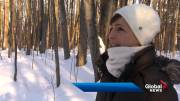 Play video: Pointe-Claire owl turns heads