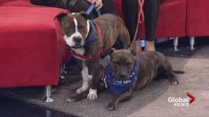 Adopt a Pet: Sage and Zeus (03:55)