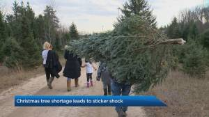 Christmas tree shortage leads to sticker shock (02:34)