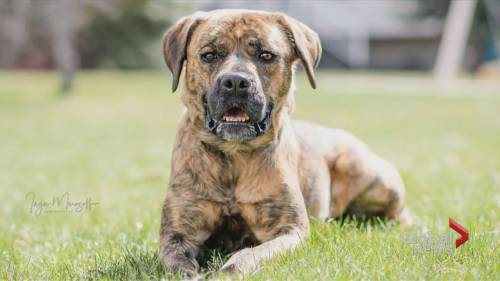 AARCS adoptable pet of the month   Watch News Videos Online