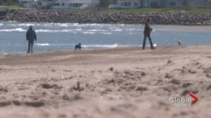 New Brunswickers look forward to a summer with fewer COVID-19 restrictions (01:47)