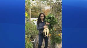 New report backs up 2020 veggie garden boom in Atlantic Canada
