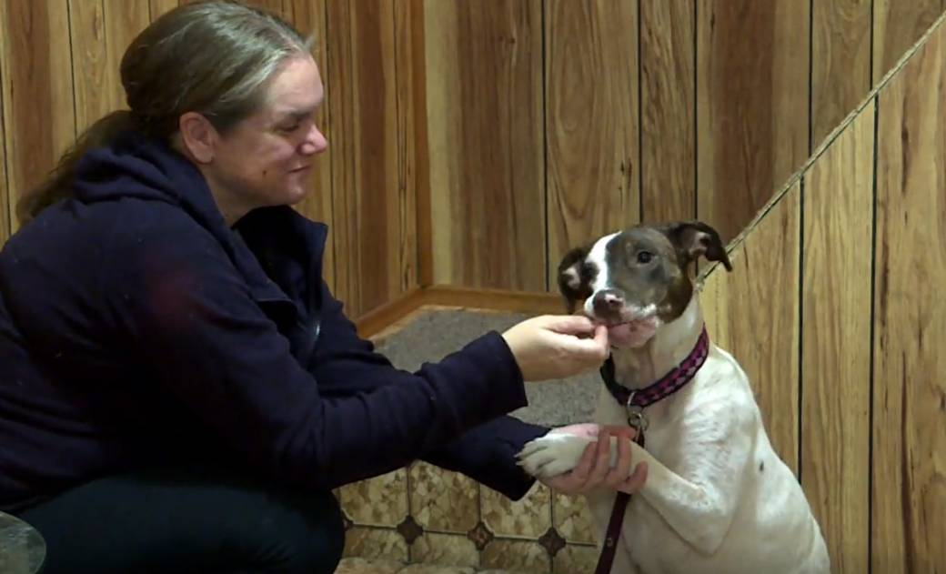 Click to play video: 'Pit bull ban adds extra challenge to finding Winnipeg rescue dog a new home'