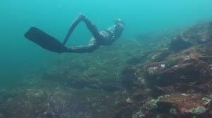 This is BC: Chris Samson freediver (02:30)