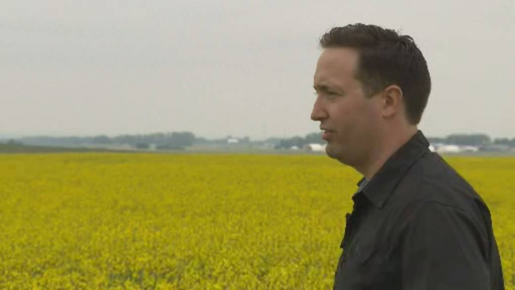 Click to play video: 'Heat and drought decimating crops, impacting Canada's food supply'