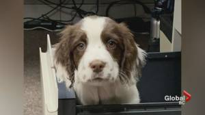 C. difficile puppy named after contest
