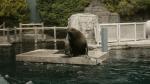 Explore BC: Vancouver Aquarium