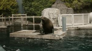 Explore BC: Vancouver Aquarium (00:38)