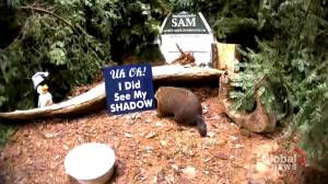 Shubenacadie Sam makes prediction despite cancelled groundhog day celebrations