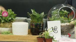 """Designer Cory Christopher talks ways to """"grow your love"""" with Valentine's plants"""