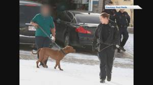 3 people injured in northwest Calgary dog attack