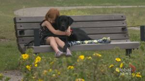 Police trauma dog in Alberta recognized for helping kids through 'scary' criminal cases (01:49)