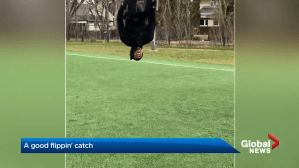 Eskimos receiver Shai Ross shows off gymnastic talents