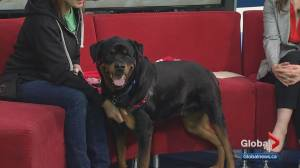 Calgary Humane Society Pet of the Week: Kenji