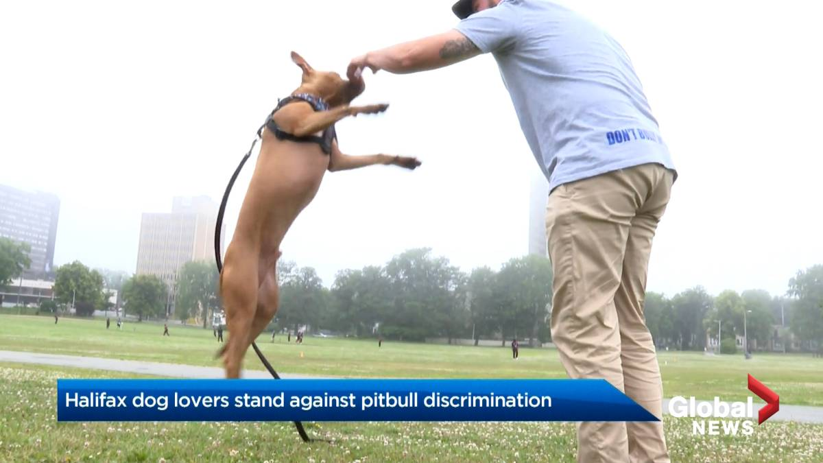 Click to play video: 'Halifax dog lovers gather in solidarity against banning 'dangerous' breeds in Nova Scotia'