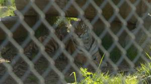 Humane Society claims Greater Vancouver Zoo failing animals