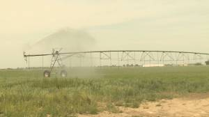 Alberta announces 'historic' $815M irrigation investment to benefit 8 southern districts (01:53)
