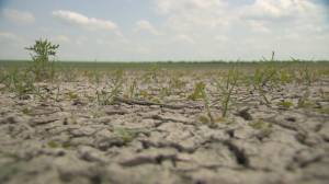 Sask. government announces aid for livestock producers struggling with drought (01:51)