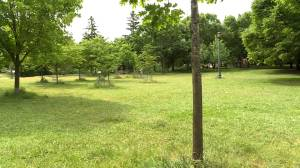 Toronto police seeking public's help in identifying deceased woman found in Trinity Bellwoods Park