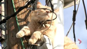 Kitty stuck atop pole in northeast Calgary rescued by firefighters
