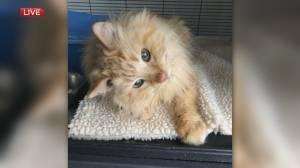 Alberta Animal Rescue Crew Society's adoptable pet of the month (03:32)