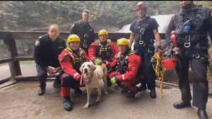 Dramatic dog rescue caught on video in Maple Ridge (00:50)