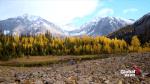 Fall travel ideas in Alberta