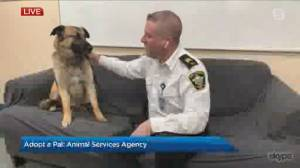 Adopt a Pal: Animal Services Agency (03:57)