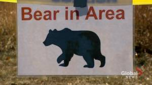 Calgary park closed, residents warned after bears enter city (01:44)