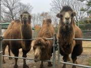 Play video: Bringing Peterborough's Riverview Park and Zoo to you during the coronavirus pandemic