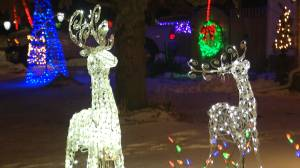 Napanee couple noticed for their holiday lights display