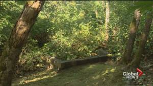 Possible partial human remains located in wooded area of Surrey (00:31)