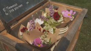 Self-serve flower cart offers fresh blooms in North Vancouver
