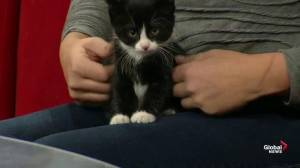 Adopt-a-Pet: Turnip the kitten and Pixie the dog
