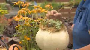 Get Gardening: Autumn décor