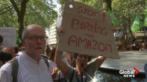 'Stop burning the Amazon': protesters gathered outside Brazilian embassy in Brussels (01:39)