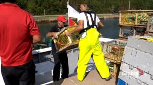 Mi'kmaw chiefs demand DFO to stop seizing lobster traps (01:47)