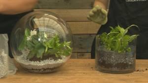 GardenWorks: DIY Terrarium