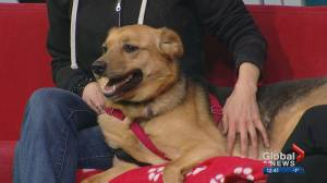 Calgary Humane Society Pet of the Week: Maggie