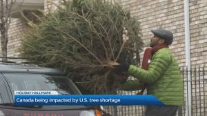 How the U.S. Christmas tree shortage affects Canada