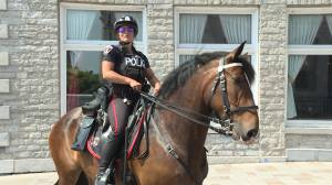 Cutting the Kingston Police Mounted Unit will save the force $48,000 a year