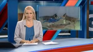 Global Okanagan News at 5:30: Jan. 5 Top Stories