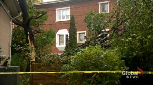 Blustery, wet weather downs trees and power lines across Montreal