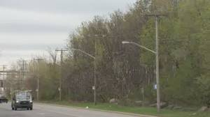 Petition calls for Pointe-Claire to help preserve Fairview forest (01:55)