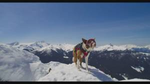 Telus Spark goes to the dogs