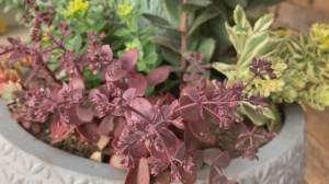GardenWorks: blooming succulents (03:25)