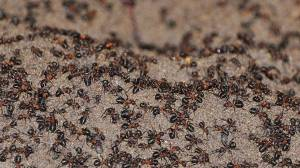Million ants escape from Soviet-era nuclear bunker in Poland