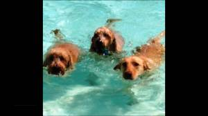Kingston dogs will have the last swim of the season at the Outdoor Aqua Park
